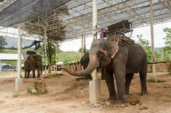 Elephant with howdah at elephants camp,Thailand Royalty Free Stock Photography