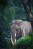 Elephant. A huge elephant in zoo Royalty Free Stock Photos