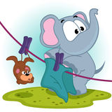 Elephant hung mouse dry  on rope Stock Images