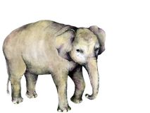 Elephant Illustration Royalty Free Stock Photography