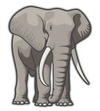 Elephant. Illustration of a bull elephant Royalty Free Stock Photography