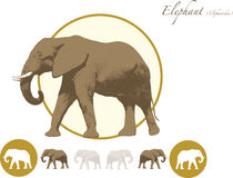 Elephant illustration logo. Elephant illustration in jpeg and eps format for editiing. Can be used full colour or white out Stock Photography