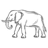 Elephant. Illustration Elephant was created in black and white colors.  Painted image is  on white background Royalty Free Stock Photo