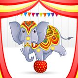 Elephant In Circus Stock Images