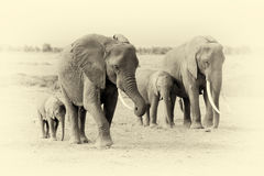 Free Elephant In National Park Of Kenya. Vintage Effect Stock Photos - 76423743