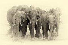 Free Elephant In National Park Of Kenya. Vintage Effect Royalty Free Stock Photos - 76423988