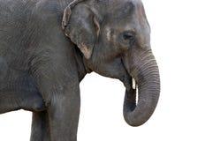 Elephant Indian Cutout Isolated Royalty Free Stock Image