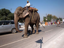 Elephant on Indian road. An elephant walks on an Indian road Stock Photo