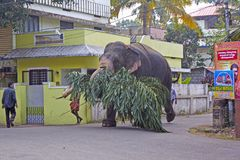 Elephant on the Indian street Stock Images
