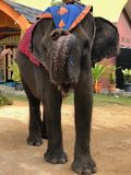 Elephant Indonesian stock image