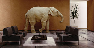 Elephant indoor Stock Images