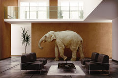 Elephant indoor Royalty Free Stock Photos