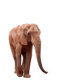 Elephant isolated on white. African elephant isolated on white with clipping path Stock Photo