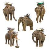 Elephant isolated on white background. Elephant isolated on a white background Royalty Free Stock Image