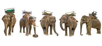 Elephant isolated on white background Stock Photos