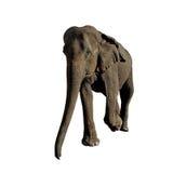 Elephant isolated on white background. Walking elephant isolated on white background Royalty Free Stock Photo
