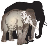 Elephant and its shadow illustration Stock Image