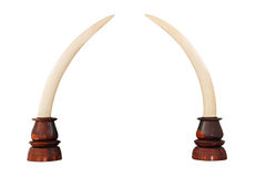 Elephant Ivory on White Background with Clipping Path Stock Photo