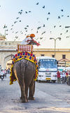 Elephant in Jaipur Fort royalty free stock photo