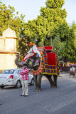 Elephant in Jaipur Fort Stock Photos