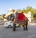 Elephant in Jaipur Fort with tourists stock images