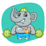 Elephant in Jeans Pants Raises Barbell of Watermelons Stock Photos