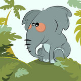 Elephant in the jungle Stock Photos