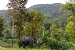 Elephant in the jungle stock photography