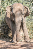 An elephant Stock Image