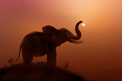 Elephant in Jungle Royalty Free Stock Images