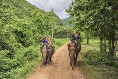 Elephant jungle tour Stock Images
