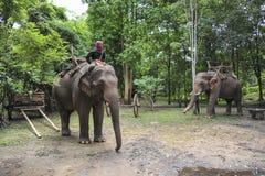 Elephant jungle tour Stock Photos