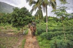 Elephant jungle tour Stock Photo