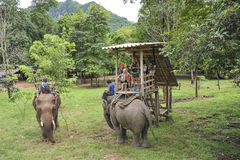 Elephant jungle tour. Tourists stepping on an elephant for a tour through the jungle in Thailand Stock Images