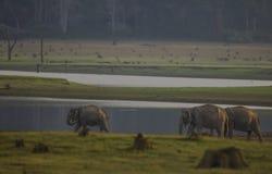 Elephant. FROM KABINI NAGARHOLE NATIONAL PARK Royalty Free Stock Image