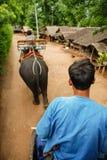Elephant, kanchanaburi. Elephant trekking in kanchanaburi, Thailand Stock Photography