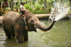 Elephant keeper Stock Photos