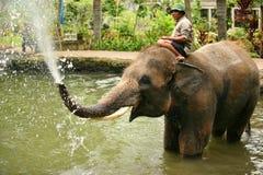 Elephant keeper Royalty Free Stock Photo