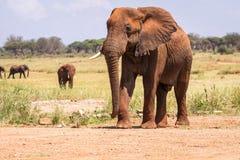 Elephant in Kenya, Africa Stock Images