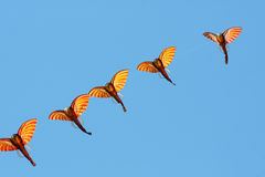Elephant kites Royalty Free Stock Image