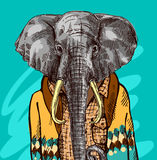 Elephant in knitted sweater. Vector illustration for greeting card, poster, or print on clothes. Fashion Style drawing. Hipster Stock Photos