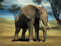 Elephant. With large tusks in the Serengeti Stock Photo