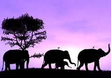 Elephant Leads The Way as the others follow. One Elephant Leads The Way as the others follow with a purple sunset or sunrise Royalty Free Stock Photography