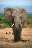 Elephant life style in South Africa stock photo