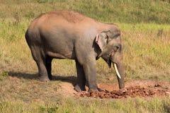 The elephant. Royalty Free Stock Image