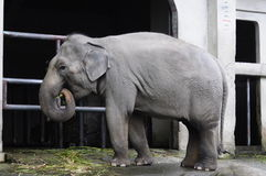 Elephant. Located in Muzha, Taipei City Zoo is a few minutes' walk from the Taipei City Zoo MRT Station. It is considered as one of the largest zoos in Asia stock images