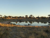 Elephant Lodge in Botswana. The Elephant Lodge in Botswana at evening time Royalty Free Stock Photos