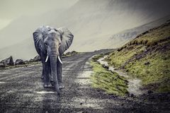 Elephant on lonely road. Big elephant on lonely rural road royalty free stock photo