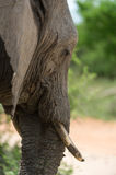 Elephant look Royalty Free Stock Photo