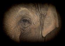 Elephant low key Royalty Free Stock Photography